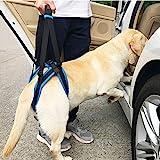 KOBWA Hunde Gehhilfe, Geschirr Hilfe Hunde für Probleme an der Wirbelsäule der Hüfte und Den Knien Ihres Hundes(L)