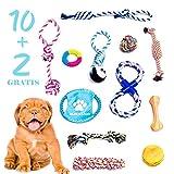 BLACK LION 10+2 Hundespielzeug, Intelligenzspielzeug für große und kleine Hunde