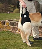 Nature Pet Hunde Tragehilfe XL schwarz/Hunde Gehhilfe/Hunde Rehahilfe, das Hilfsgeschirr für Probleme an der Wirbelsäule, der Hüfte und den Knien ihres Hundes.