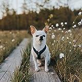 Hurtta Gepolstertes Hund-Geschirr, Y-Form