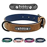 Didog Hundehalsband, weiches, gepolstertes, Leder, mit personalisierbarem, graviertem Namensschild, D-Ring. Für kleine und mittelgroße Hunde geeignet.
