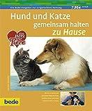 Hund und Katze gemeinsam halten zu Hause