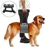 RockPet Hunde Hilfsmittel, von Tierärzten genehmigte Hebebühne für Rehabilitation (M,Grau)