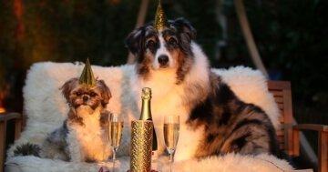 Hunde zu Silvester