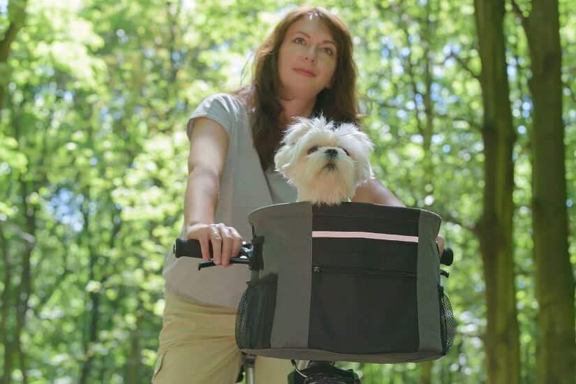 Fahrradfahren mit Hund im Korb