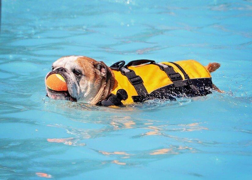 Hund mit Schwimmweste im Hundeschwimmbad zuhause