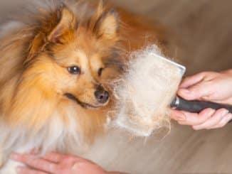 Hundehaare entfernen