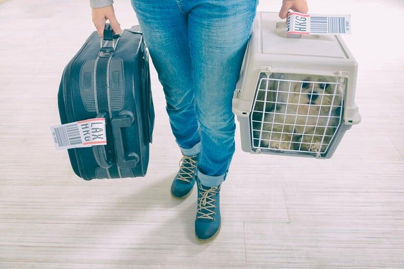 Hund im Transportbox vor einem Flug