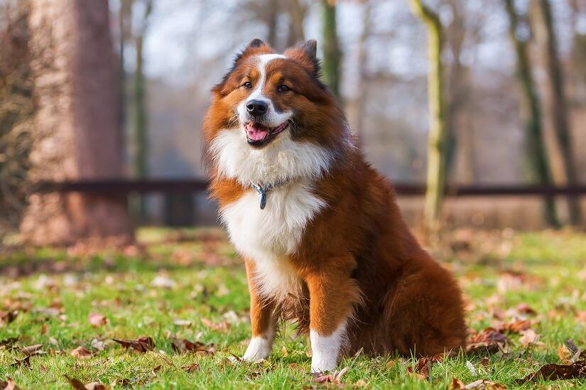 Vibrationshalsband Hund