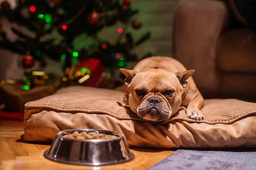 böllerfreies Silvester mit Hund