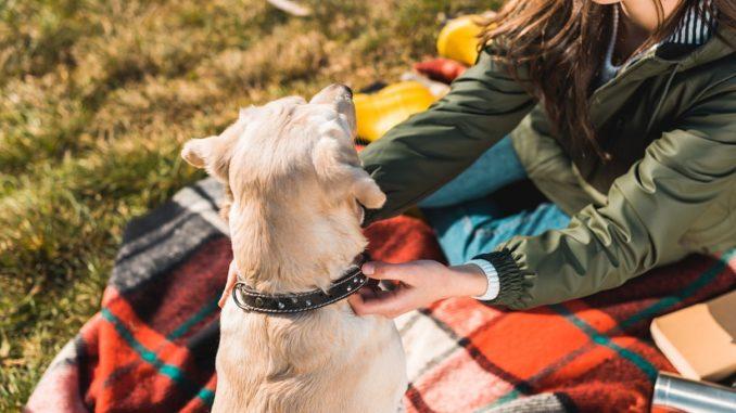 Ist Hundeerziehung mit speziellen Halsbändern sinnvoll und tiergerecht?