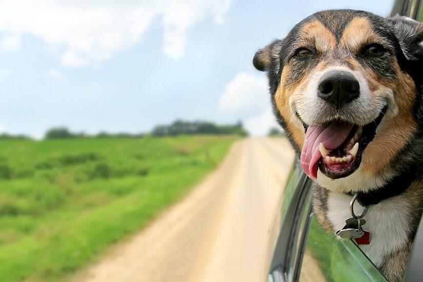 mit dem Hund im Auto