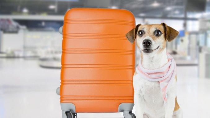Mit dem Hund im Flugzeug