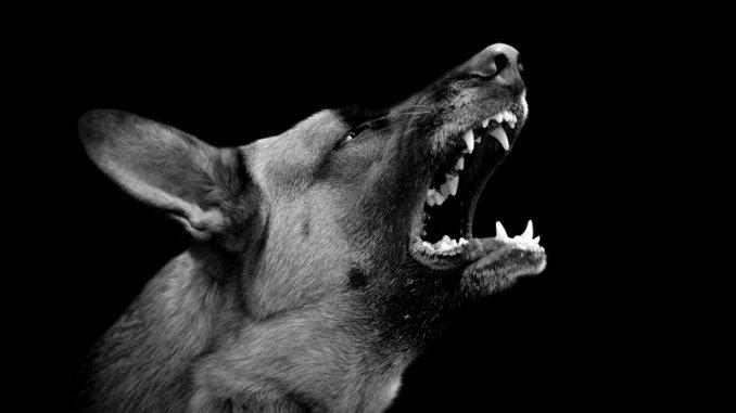 Angst vor Hunden