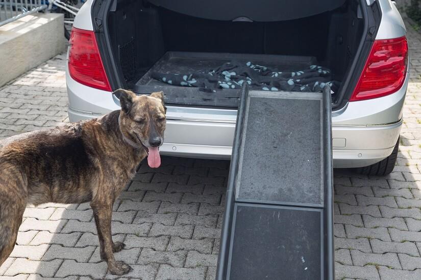 Einstiegshilfe-Hund