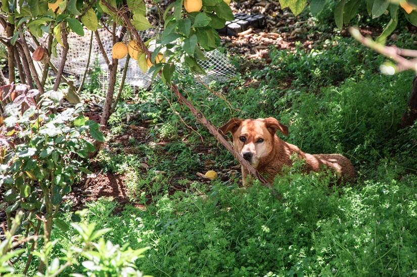 Garten einzäunen Hund