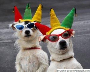 Hundekostüme für den Karneval
