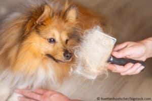 Hundehaare entfernen u aber wie u modern dogs