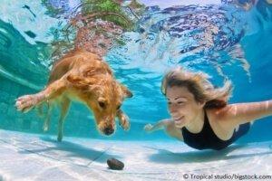 Hund schwimmt mit Herrchen