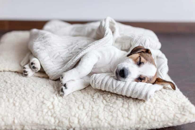 Hunde-Schlafplatz