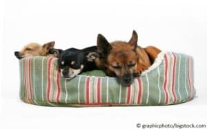 Schlafplatz für den Hund ein Hundebett