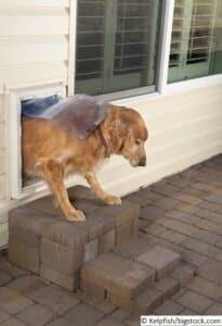 Eine Hundeklappe für den Hund