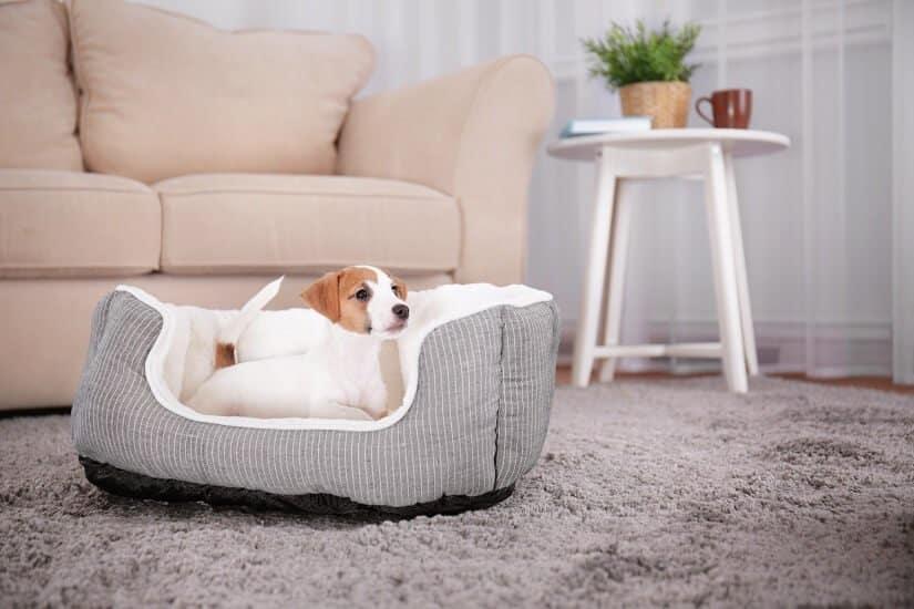 Hundeplatz im Haus
