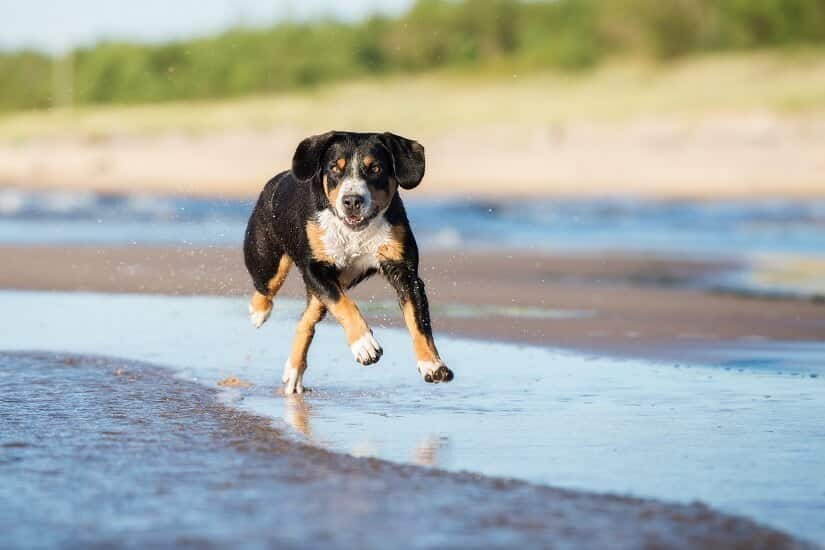 Hundezelt wasserdicht
