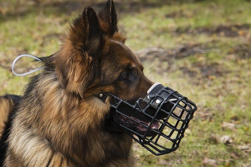 Maulkorb Hund richtige Größe
