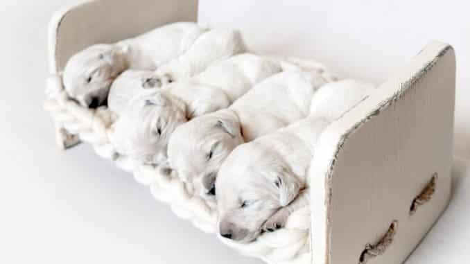 Schlafplatz-Hund