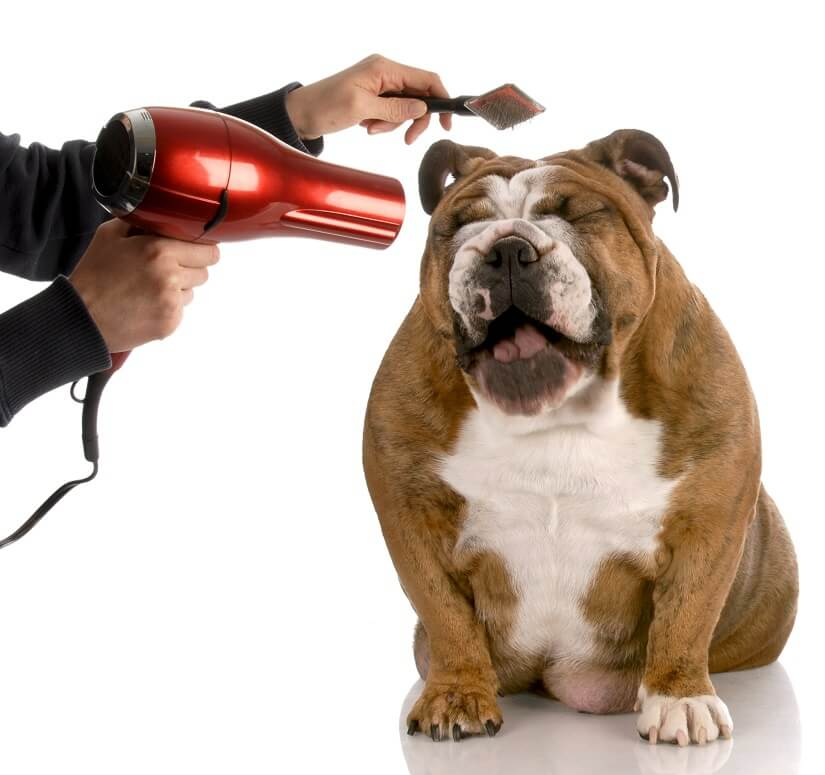 Den Hund Bürsten und Kämmen