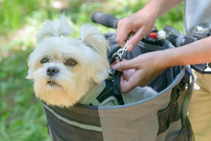 den Hund transportieren Hundefahrradkorb