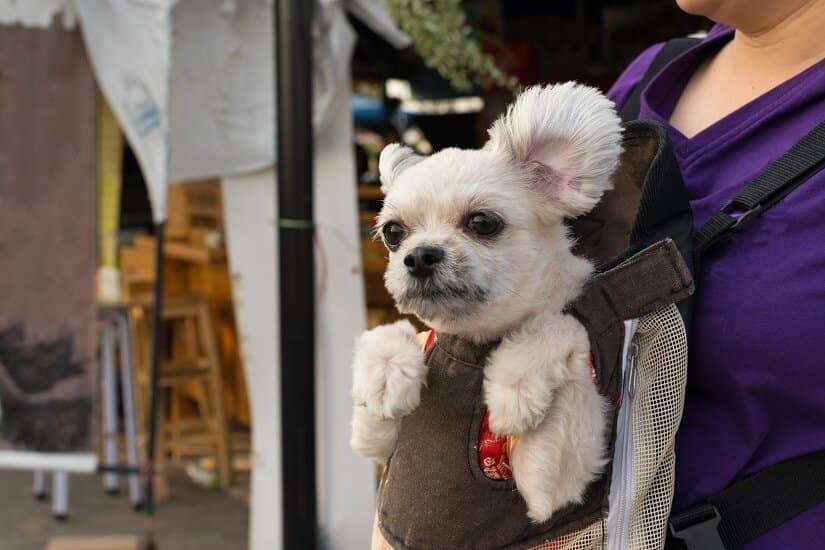 Hund in Hundetragetasche