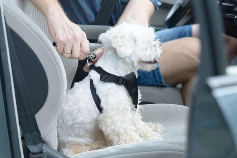 Den Hund transportieren