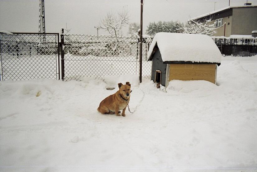 isolierte Hundehütte