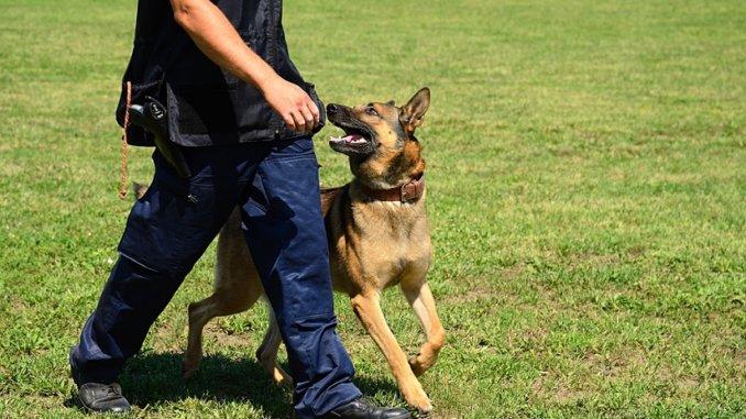 Sprayhalsband für hunde