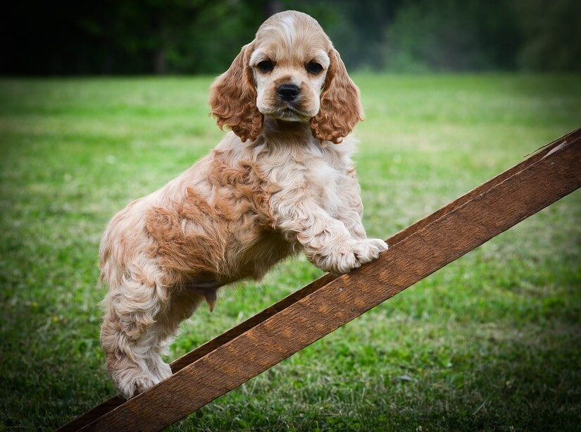 Alternative zur Hunderampe