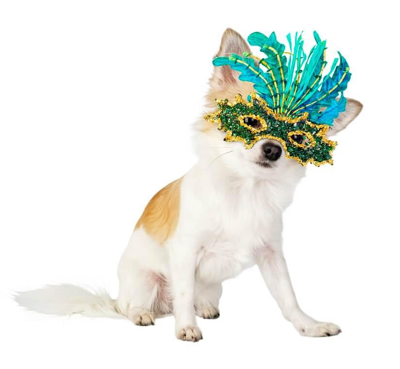 Hund Karneval