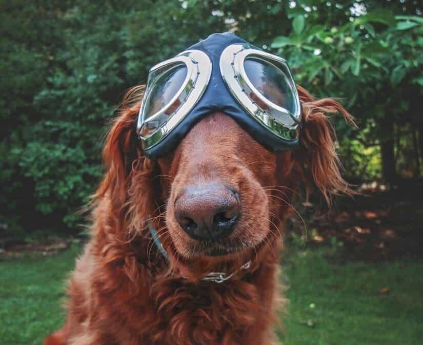 Hundbrille fürs Fahren mit einem Cabrio