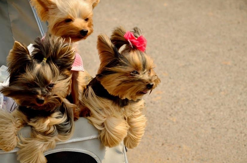 Hundebuggy: genial für unterwegs