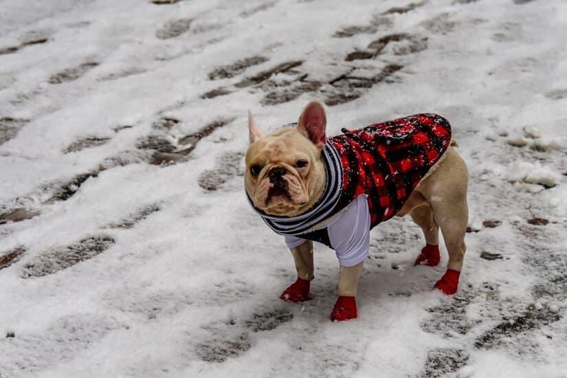 Hundejacke für den Winter