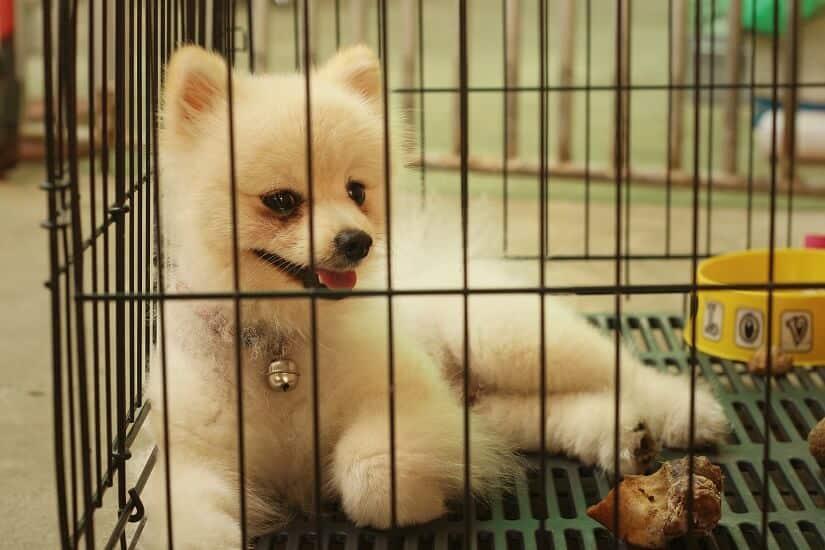 Hundekäfig faltbar