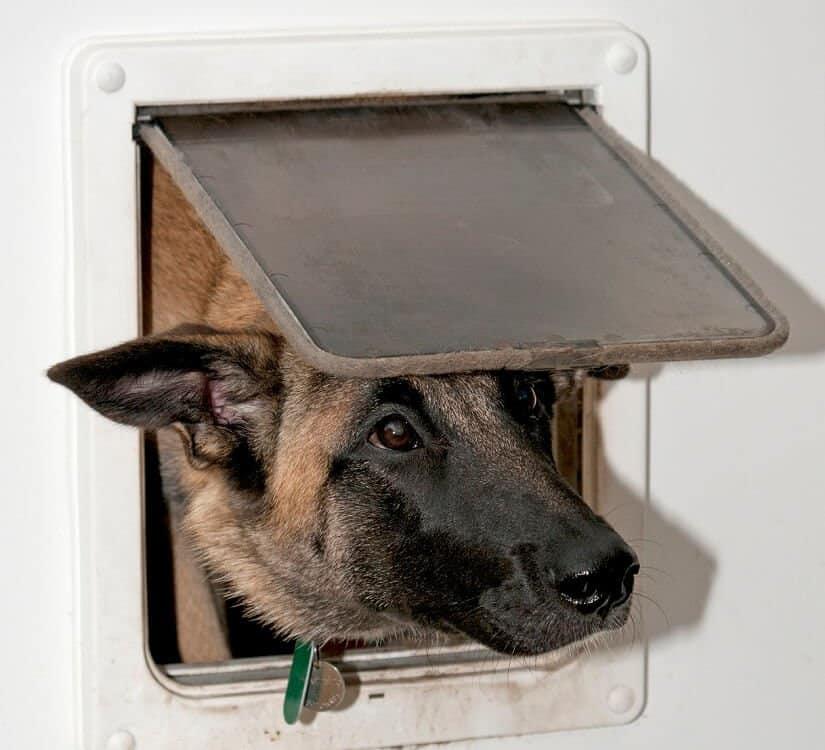 Hundeklappe isoliert