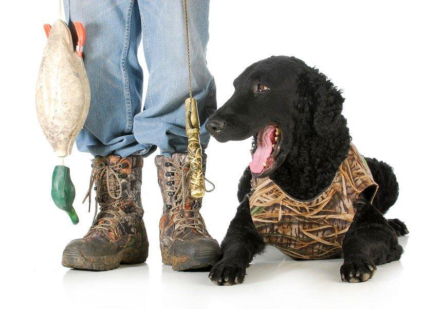 Hundeweste Jagd