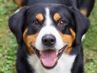 Mit einem Hurtta Geschirr ist das Leben des Hundes einfach schöner!