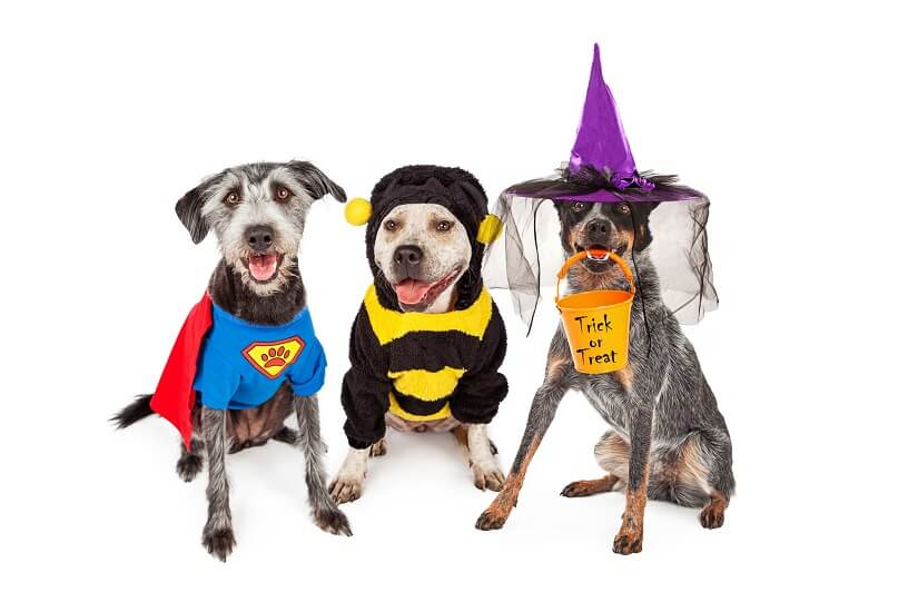 Kostüme für Hunde