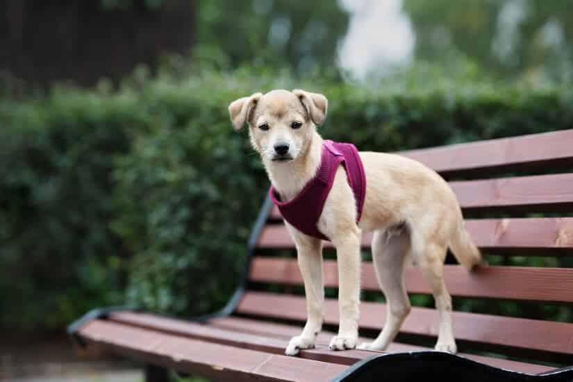 Welpengeschirr für kleine Hunde