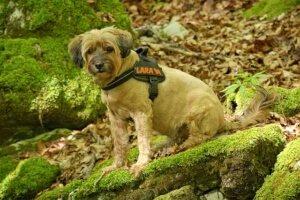 Hundegeschirr gepolstert