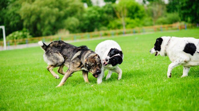 Ferntrainer für den Hund