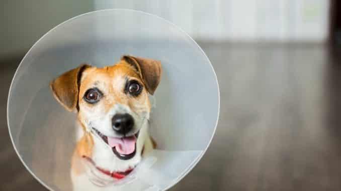 Halskrause für den Hund
